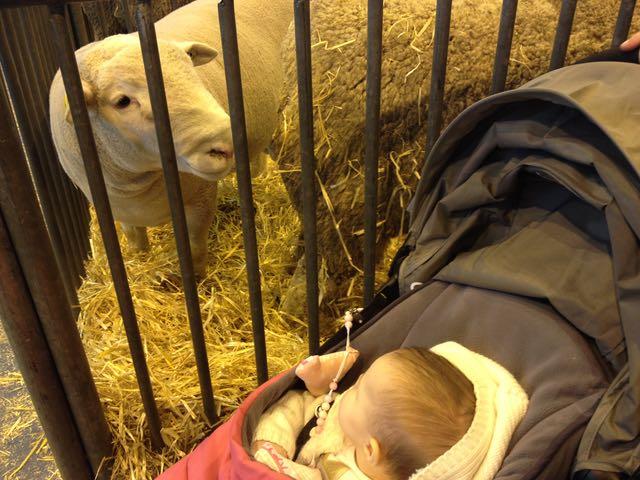 Salon d'Agriculture_lamb