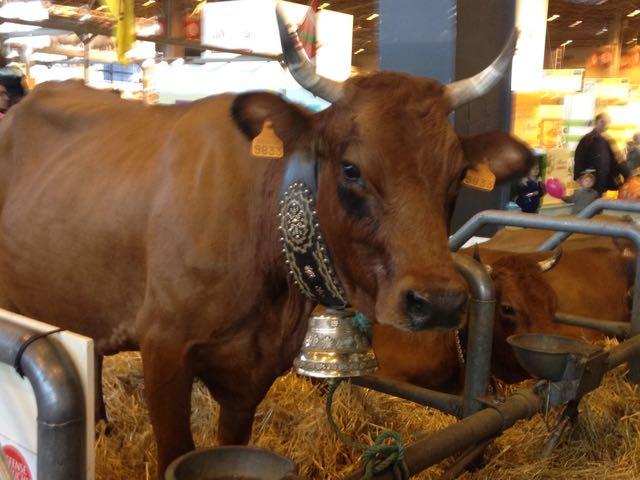 Salon d'Agriculture_bull
